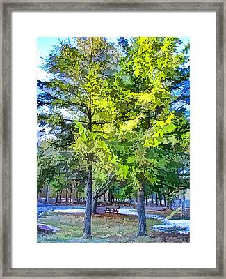 Pine Tree 1 Framed Print by Lanjee Chee