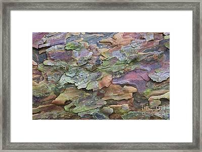 Pine Tree Bark Framed Print by Tim Gainey