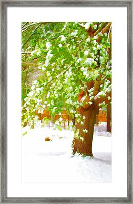 Pine Tree Covered With Snow 1 Framed Print by Lanjee Chee