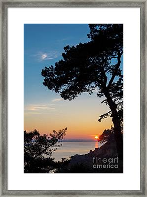 Pine Tree Framed Print by Delphimages Photo Creations