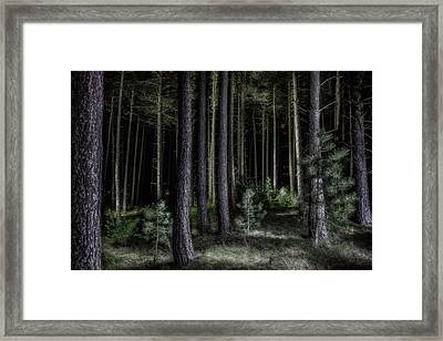 Pine Tree Forest At Night Framed Print