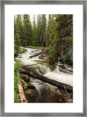 Pine Tree Forest Creek Portrait Framed Print