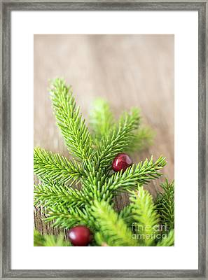 Pine Tree Needles Framed Print