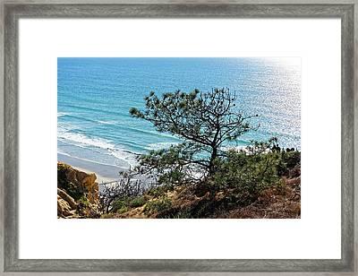 Pine Tree On Coast Framed Print