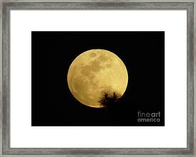 Pine Tree Silhouette Full Moon Framed Print