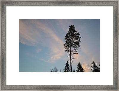 Pine Tree Silhouette Framed Print