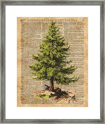 Pine Tree,cedar Tree,forest,nature Dictionary Art,christmas Tree Framed Print by Jacob Kuch