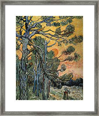 Pine Trees At Sunset Framed Print by Vincent van Gogh