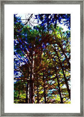 Pine Trees In Abstract 1 Framed Print