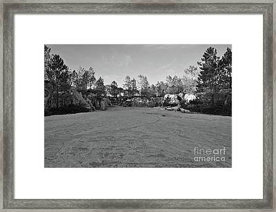 Pine Trees Near The Cliffs Framed Print by Angelo DeVal