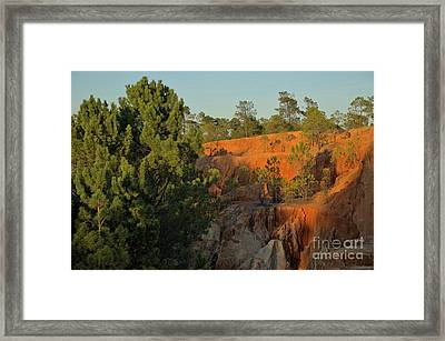 Pine Trees On The Cliffs Framed Print by Angelo DeVal