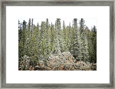 Framed Print featuring the photograph Pine Trees Rustic Mountain by Andrea Hazel Ihlefeld
