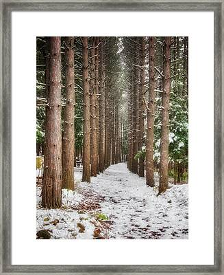 Pine Trees - Winter At Retzer Nature Center  Framed Print by Jennifer Rondinelli Reilly - Fine Art Photography