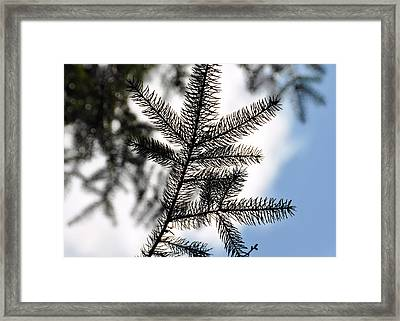 Pine View Framed Print by JAMART Photography