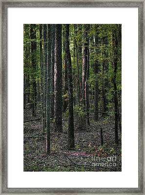 Framed Print featuring the photograph Pine Wood Sunrise by Skip Willits