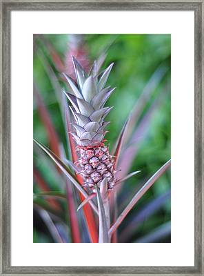 Pineapple Framed Print by Kelly Wade