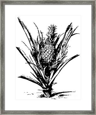 Pineapple Plant With Fruit Framed Print
