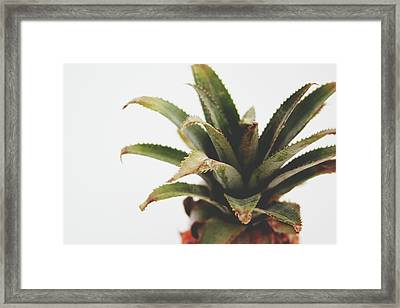Pineapple Top- Art By Linda Woods Framed Print