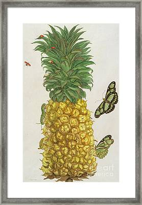 Pineapple With Caterpillar And Butterflies Framed Print