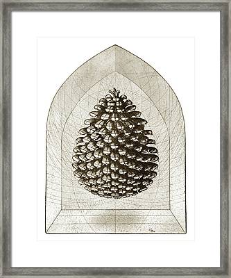 Pinecone Framed Print by Charles Harden