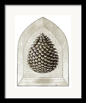 Fir Trees Drawings Framed Prints