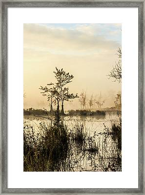 Pinelands - Mullica River Framed Print by Louis Dallara