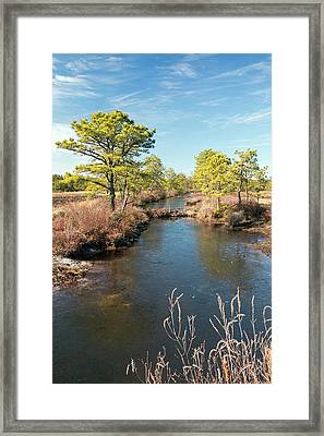 Pinelands Water Way Framed Print