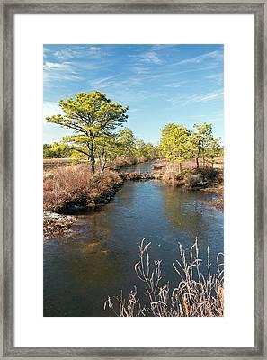 Pinelands Water Way Framed Print