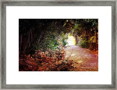 Piner Creek Path Framed Print
