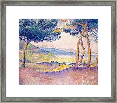Pines Along The Shore, 1896 Framed Print