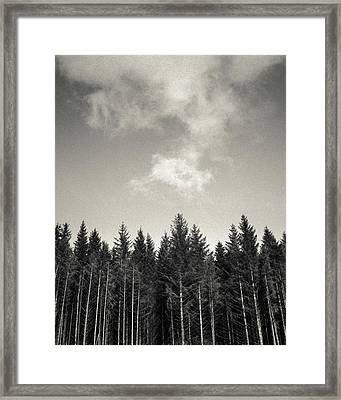 Pines And Clouds Framed Print