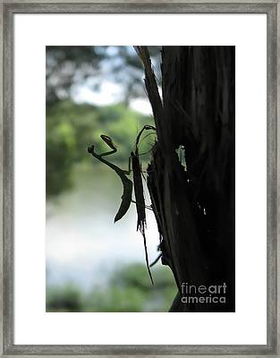 Pines And Prayers Framed Print