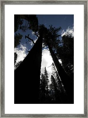 Pines Framed Print by Chris Brewington Photography LLC
