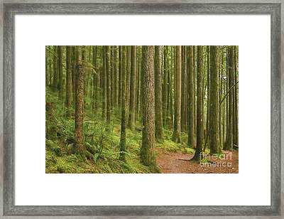 Pines Ferns And Moss Framed Print