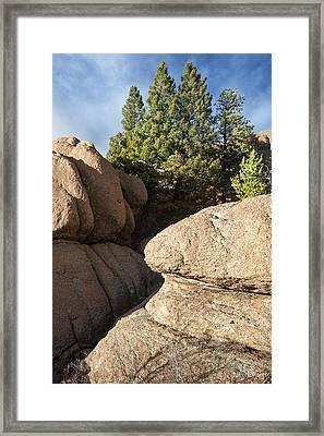 Pines In Granite Framed Print