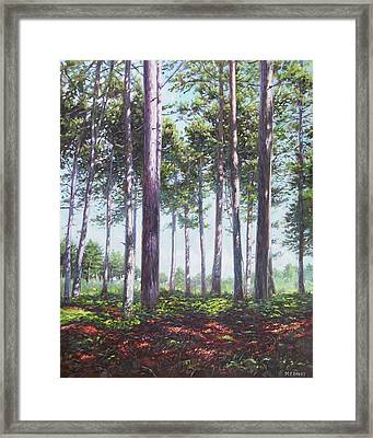 Pines In New Forest Shade Framed Print