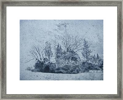 Pinetum  Cammo Framed Print by Calum McClure