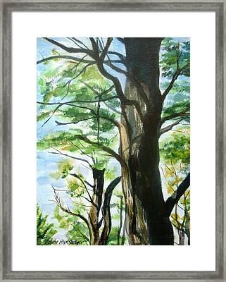 Piney Woods Framed Print