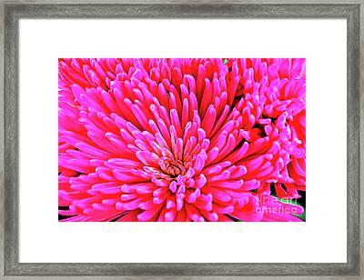 Pink 137 Framed Print