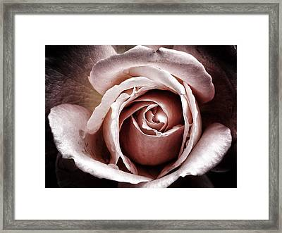 Pink After The Rain Framed Print