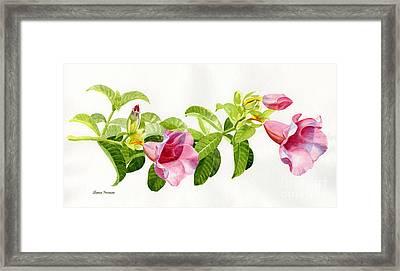 Pink Allamanda Blossoms On A Branch Framed Print by Sharon Freeman