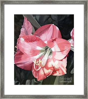 Framed Print featuring the painting Pink Amaryllis by Laurie Rohner