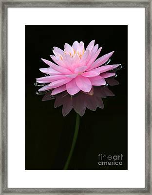 Pink And Alone Framed Print by Sabrina L Ryan