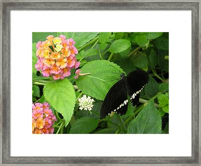 Pink And Black In The Garden Framed Print