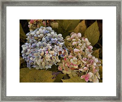 Pink And Blue Framed Print by JAMART Photography