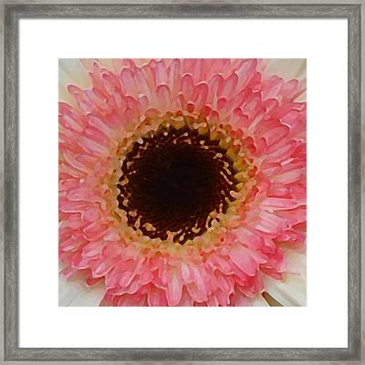 Pink And Brown Gerber Center Framed Print by Amy Vangsgard