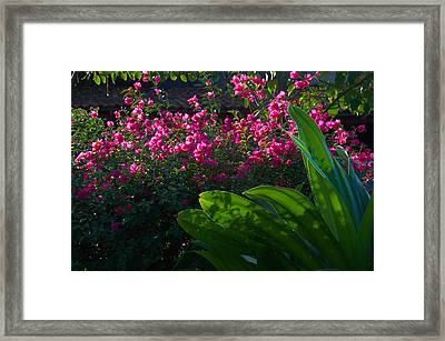 Pink And Green Framed Print by Jim Walls PhotoArtist