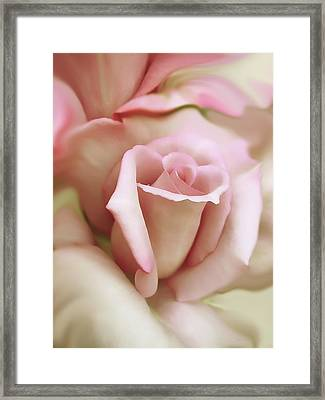 Pink And Ivory Rose Portrait Framed Print by Jennie Marie Schell