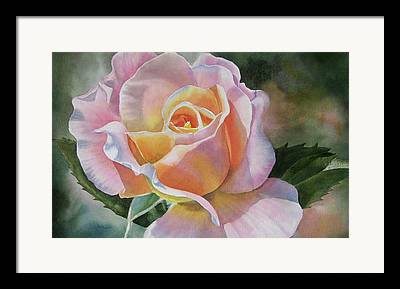 Peach Roses Framed Prints
