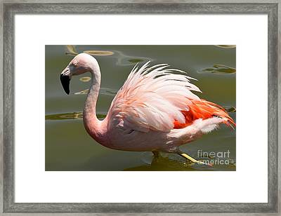 Pink And Proud Framed Print